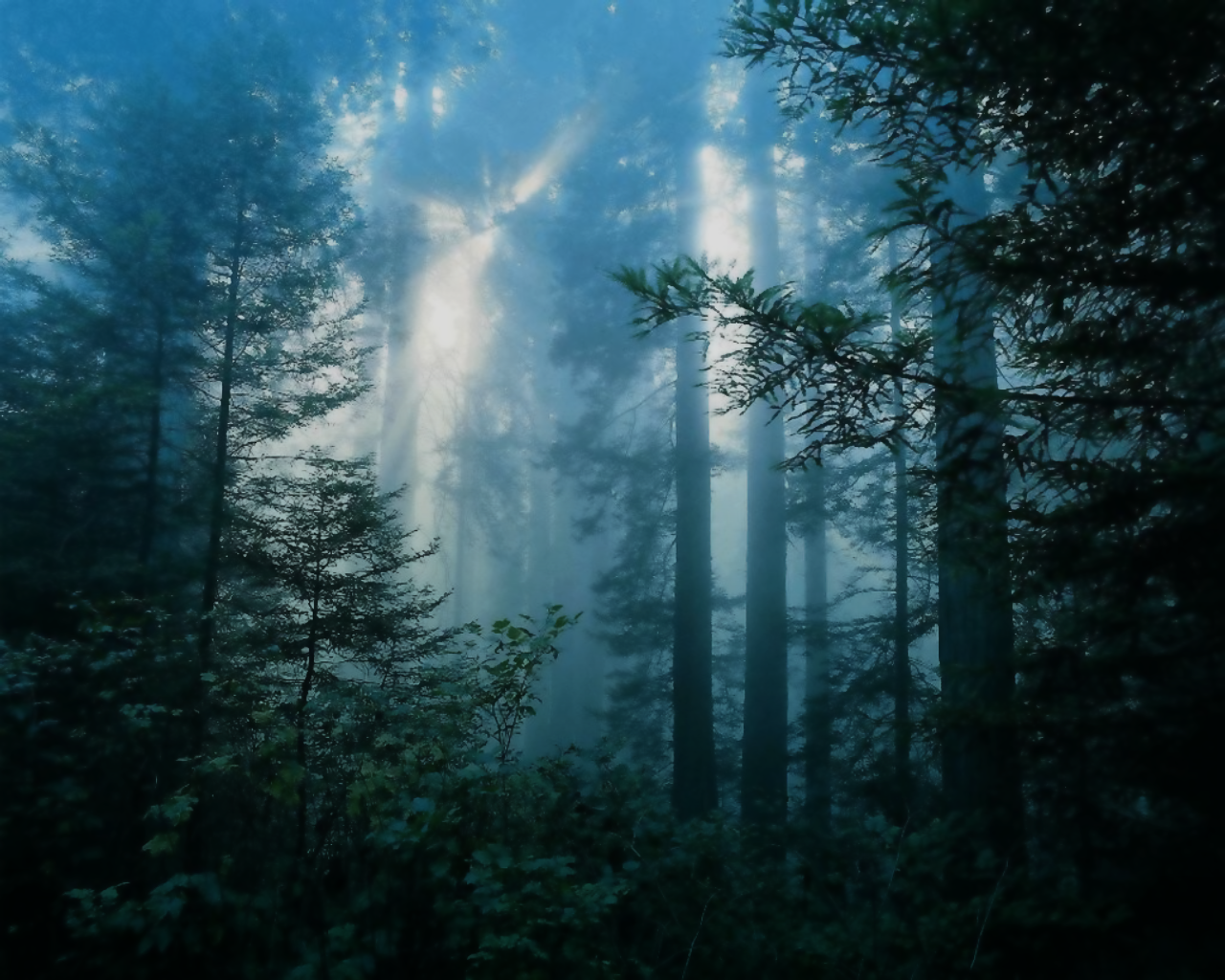 wallpaper dark forest. Amazing forest wallpaper via